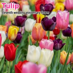 Wedding Anniversary Flowers List with Pictures and Video