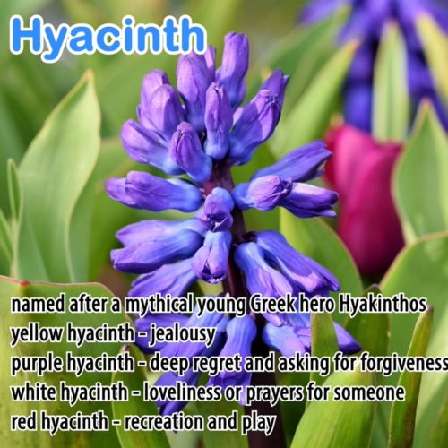 The Hidden Meaning of Flowers – Avatar Education